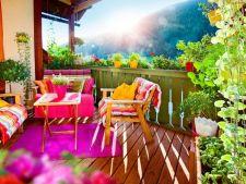 Plante cataratoare care dau farmec balconului si terasei