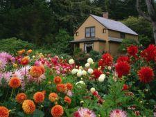 5 motive pentru care nu-ti infloresc plantele. Iata ce trebuie sa faci!