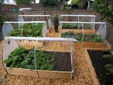 6 legume numai bune de cultivat peste iarna. Iata ce trebuie sa plantezi acum!