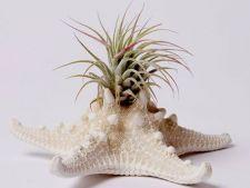6 modele originale de ghivece si rafturi de flori obtinute din cele mai neasteptate obiecte