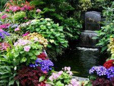 7 sfaturi de amenajare a unei gradini moderne