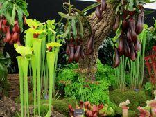 Gradina horror: 4 plante carnivore pe care le poti creste in casa ta