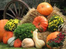 Cum sa cultivi dovlecii perfecti pentru Halloween