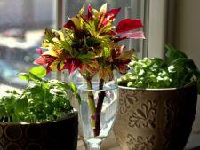 5 flori spectaculoase care iti pot impodobi casa in aceasta iarna