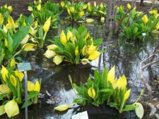 Top 5 cele mai urat mirositoare flori din lume. Ai indrazni sa le adulmeci?