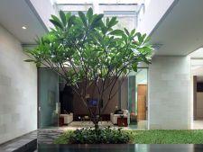 5 idei magnifice pentru o gradina de interior pe care o poti amenaja in casa ta