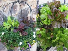 Cultiva legume in cosuri suspendate!