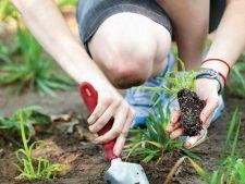 5 pesticide naturale care te scapa de buruieni. E mai simplu decat ti-ai fi imaginat!