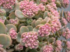 5 plante carora nu le pasa de iarna