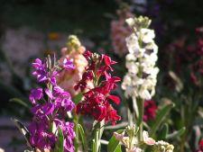 5 flori parfumate oerfecte pentru gradina ta. Iata ce trebuie sa plantezi sezonul viitor!