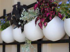 De ce sa astepti pana la primavara? Insenineaza-ti casa cu plante!