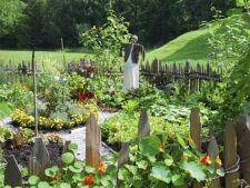 5 legume greu de cultivat. Crezi ca vei reusi?