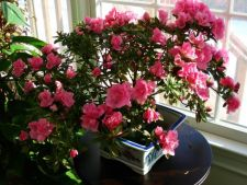 8 sfaturi de la experti, utile pentru ingrijirea plantelor de interior