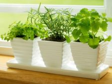 5 plante medicinale pe care nu stiai ca le ai in casa. Iata ce afectiuni trateaza!