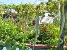 4 legume exotice pe care le poti cultiva in gradina de acasa