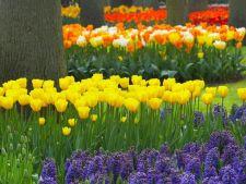 4 trucuri pentru plantele cu bulbi. Iata cum poti avea o gradina plina de flori!