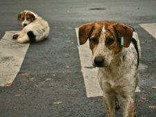 Iubitorii de animale sunt revoltati. 30.000 de maidanezi au fost omorati