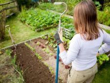 Plan pentru o gradina perfecta. Iata ordinea in care va trebui sa cultivi legumele anul acesta!