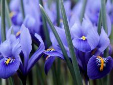 5 flori de primavara care nu trebuie sa lipseasca din gradina ta. E timpul sa le plantezi!