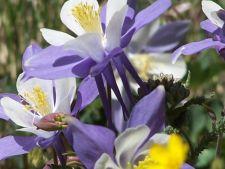 5 plante decorative care sunt perfecte pentru un gradinar relaxat