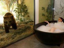 3 hoteluri cum nu ai mai vazut ! Ai avea curaj sa dormi printre lei, ursi, rechini sau printre robot