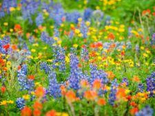 Pajisti miniaturale: cum sa-ti creezi propriul colt de rai cu plante salbatice