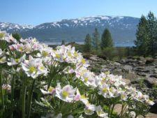 Gradina Alpina din Tromso, poarta catre Arctic