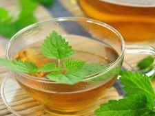 Afla ce boli poti trata cu urzica- o planta medicinala la indemana