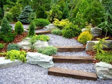5 plante perfecte pentru gradina amenajata cu piatra