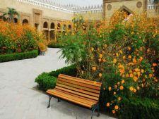 Cele mai frumoase flori pentru o gradina portocalie