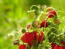 O gradina pentru sanatatea ta: cultiva fructe si legume cu un continut bogat de antioxidanti