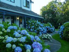 Coloreaza-ti gradina in albastru! Iata ce flori poti sa cultivi
