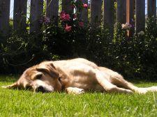 Gradina perfecta pentru cainele tau: 6 idei de amenajare pentru iubitorii de animale
