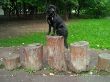 El este Yogi, cainele care numara, bate