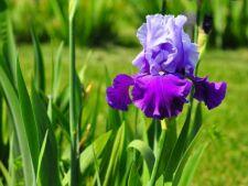 5 plante care infloresc in luna aprilie