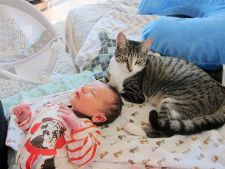 pisica bebe