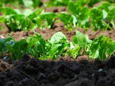 4 legume care iubesc umbra