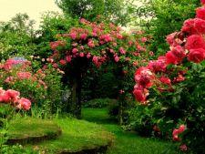 6 moduri in care iti poti decora gradina cu ajutorul trandafirilor