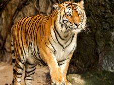 Topul celor mai mari si impresionante gradini zoologice din lume
