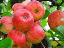 Vrei sa ai o gradina plina de fructe la vara? Iata ce trebuie sa faci inca din luna ianuarie