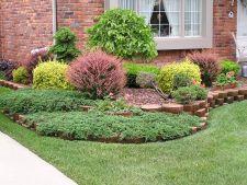 5 arbori perfecti pentru o gradina de mici dimensiuni