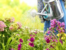 Ce sa faci in luna mai pentru a avea o gradina cu plante frumoase si sanatoase