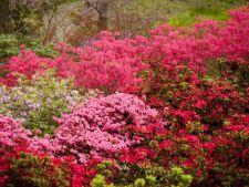 Cele mai frumoase flori ale lunii mai