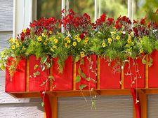 4 idei ca sa infrumusetezi ferestrele cu ajutorul plantelor