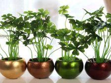 4 plante ideale pentru o casa noua, care aduc prosperitate si noroc