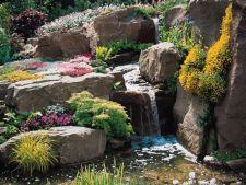 4 plante pentru decorarea rocariei din gradina ta
