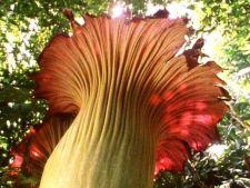 5 plante uriase de care sigur nu ai mai auzit