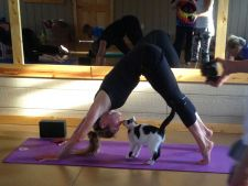pisici yoga 1