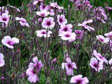 flori 1