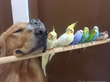 prietenie animale 1